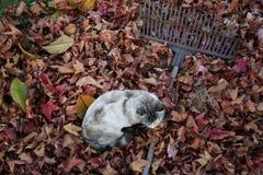 Gatto e fogli di autunno Fotografia Stock Libera da Diritti