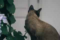 Gatto e foglie blu della tromba Immagini Stock