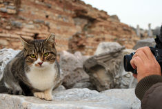 Gatto e fotografo Fotografia Stock