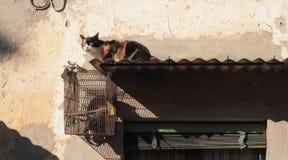 Gatto e gabbia per uccelli Fotografia Stock Libera da Diritti
