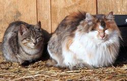 Gatto e gattino Immagini Stock Libere da Diritti