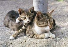 Gatto e gattino Fotografie Stock