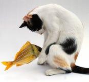 Gatto e goldfish Fotografia Stock Libera da Diritti