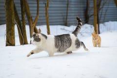 Gatto e Kitten Running nella neve Immagini Stock