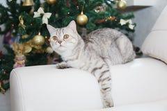 Gatto e l'albero di Natale Immagini Stock Libere da Diritti