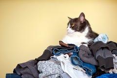 Gatto e lavanderia Immagini Stock