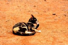 Gatto e lingua Immagine Stock
