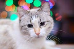 Gatto e luci di Natale bianchi Fotografia Stock Libera da Diritti