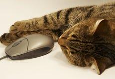 Gatto e mouse Fotografia Stock Libera da Diritti