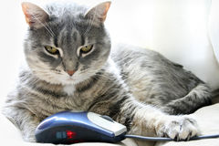 Gatto e mouse Fotografie Stock