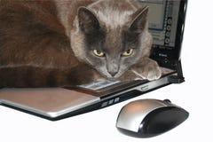 Gatto e mouse del computer portatile Immagine Stock Libera da Diritti