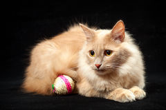 Gatto e palla Immagini Stock