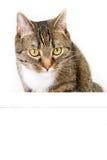 Gatto e pannello Immagine Stock