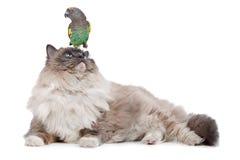Gatto e pappagallo Fotografie Stock Libere da Diritti