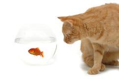 gatto e pesci immagini stock libere da diritti