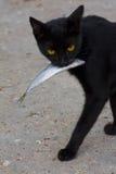 Gatto e pesci Fotografia Stock Libera da Diritti