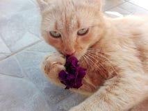 Gatto e petunia Fotografia Stock
