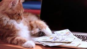 Gatto e soldi con il computer portatile stock footage