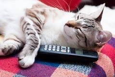 Gatto e telefono Fotografia Stock