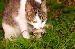 Gatto e topo Fotografia Stock Libera da Diritti