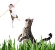Gatto e topo Fotografia Stock