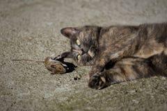 Gatto e topo II Fotografia Stock Libera da Diritti