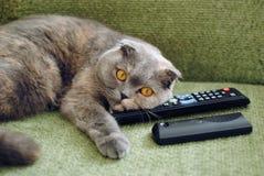 Gatto e TV Fotografie Stock