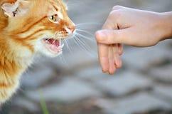 Gatto e una mano Fotografia Stock Libera da Diritti