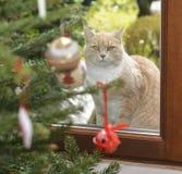 Gatto ed albero di Natale rossi con i giocattoli immagini stock libere da diritti
