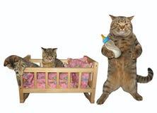 Gatto ed i suoi gattini fotografia stock libera da diritti