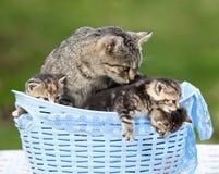 Gatto ed i suoi gattini che si trovano in un canestro Fotografia Stock