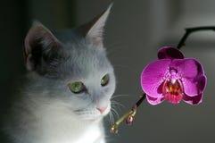 Gatto ed orchidea bianchi Immagine Stock