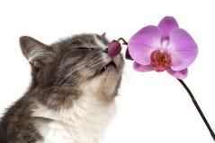 Gatto ed orchidea dentellare fotografia stock