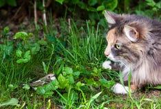 Gatto ed uccello Immagine Stock