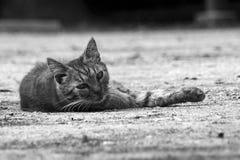 gatto esterno Immagini Stock