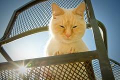 Gatto esterno Fotografia Stock