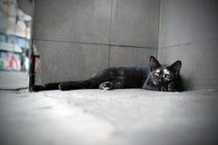 Gatto esterno Fotografia Stock Libera da Diritti
