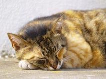 Gatto esterno Fotografie Stock