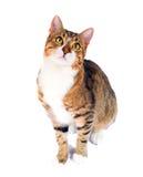 Gatto esterno adottato Immagini Stock