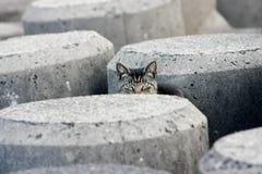 Gatto esterno di peekaboo nei blocchi in calcestruzzo Immagini Stock Libere da Diritti