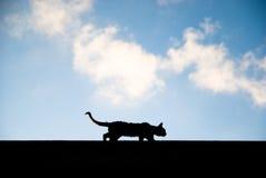 Gatto esterno Prowling Fotografia Stock Libera da Diritti