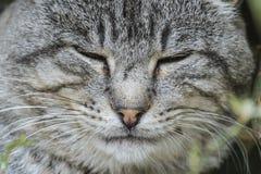 Gatto facente un pisolino della museruola Immagini Stock Libere da Diritti
