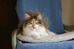 Gatto felice con gli occhi verdi Fotografia Stock Libera da Diritti