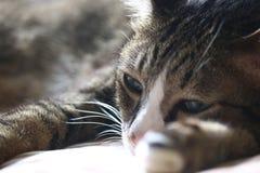 Gatto felice di sonno fotografia stock