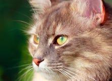 Gatto femminile con il grande occhio immagini stock