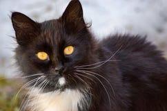 Gatto, fine in su Immagini Stock Libere da Diritti