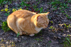 Gatto, fine in su Fotografia Stock Libera da Diritti