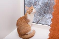 Gatto in finestra Immagine Stock Libera da Diritti