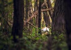 Gatto in foresta Immagini Stock Libere da Diritti