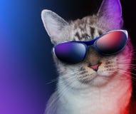 Gatto freddo del partito con gli occhiali da sole Fotografia Stock